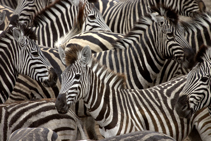 Zebra-Positionierung